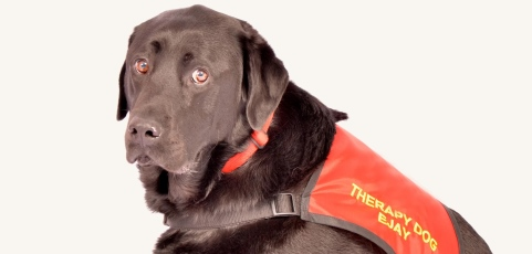 Science of Us: This Funeral Therapy Dog Helps Mourners Process Their Grief